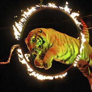 Цирки Раменского