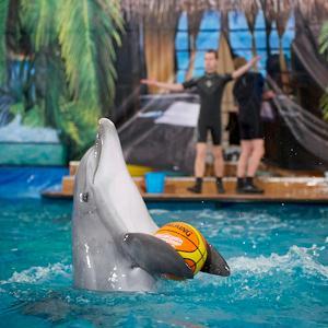 Дельфинарии, океанариумы Раменского