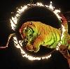 Цирки в Раменском